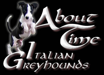 Italian Greyhound Breeder with IG Puppies Available