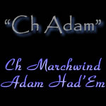 Champion Marchwind's Adam Had'Em - Seal Italian Greyhound