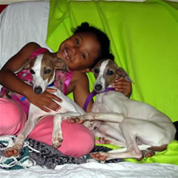 Italian Greyhound Rescue Nc Information Keywords And Pictures